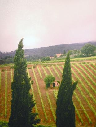 Moretti Wine Club